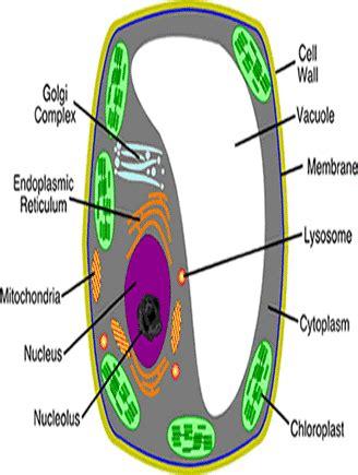 Plant cell vs animal cell essay