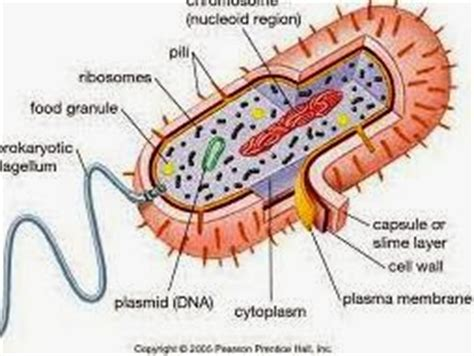 Similarities Between Plant and Animal Cells - BiologyWise